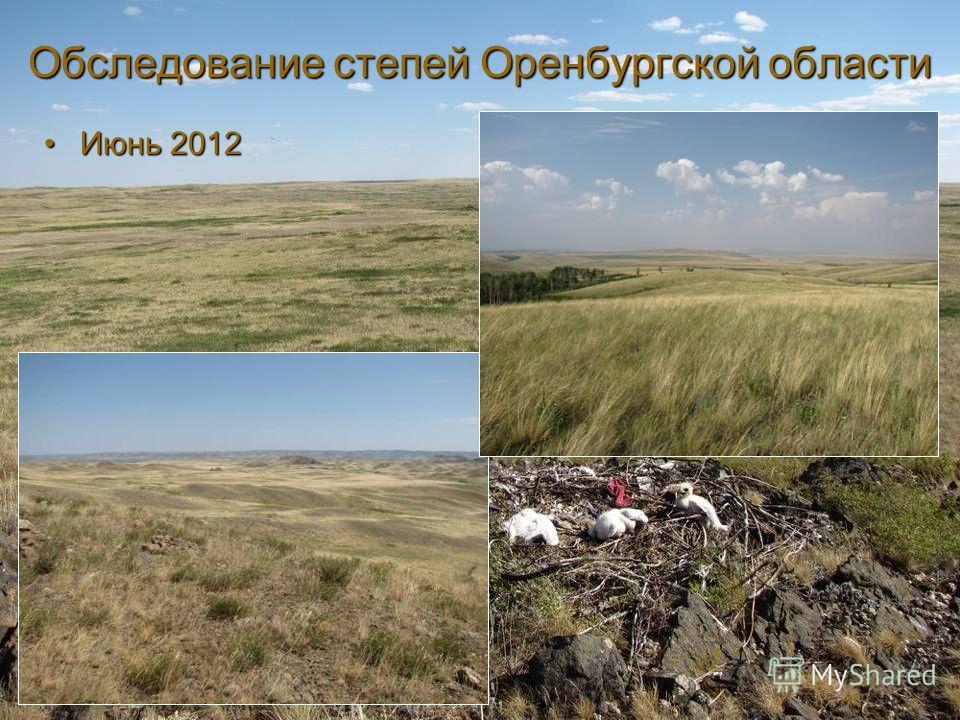 Обследование степей Оренбургской области Июнь 2012Июнь 2012