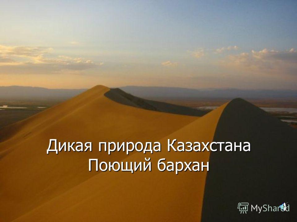 Дикая природа Казахстана Поющий бархан