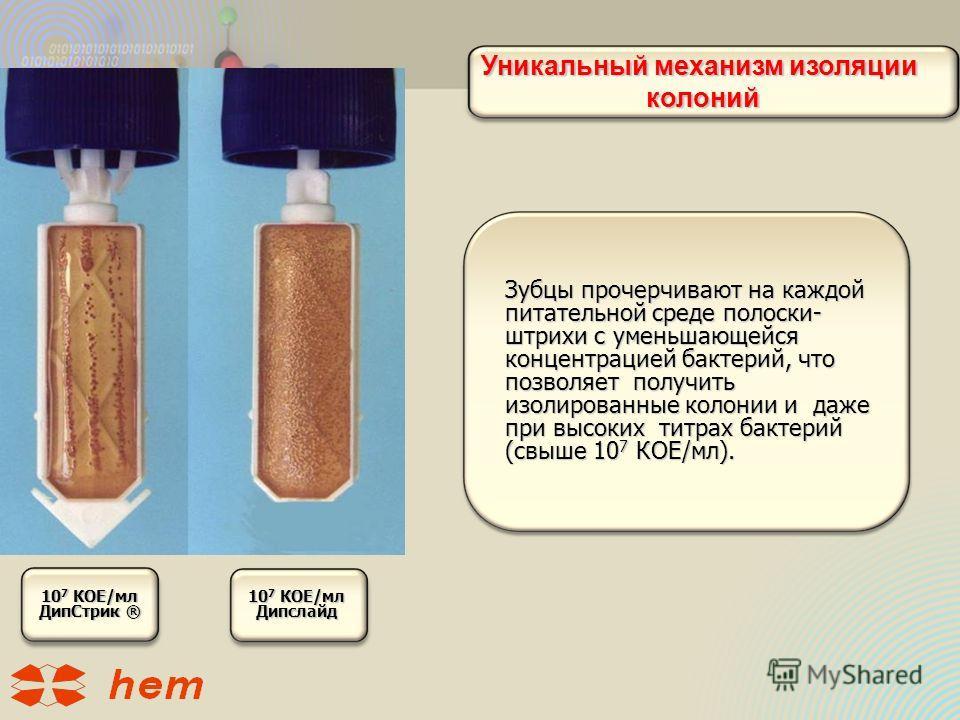 Уникальный механизм изоляции колоний колоний Зубцы прочерчивают на каждой питательной среде полоски- штрихи с уменьшающейся концентрацией бактерий, что позволяет получить изолированные колонии и даже при высоких титрах бактерий (свыше 10 7 КОЕ/мл). 1