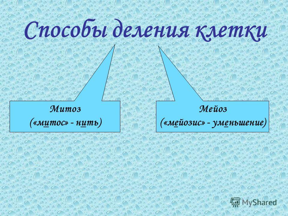 Способы деления клетки Митоз («митос» - нить) Мейоз («мейозис» - уменьшение)