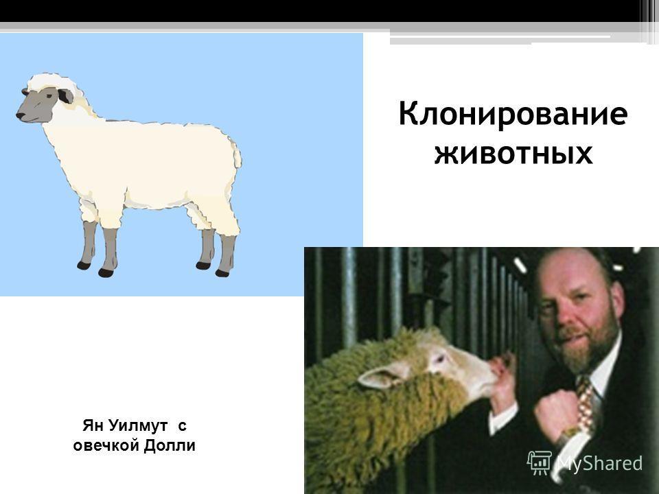 Клонирование животных Ян Уилмут с овечкой Долли