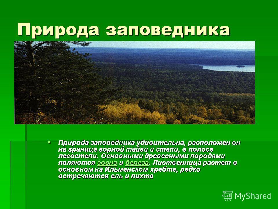 Природа заповедника Природа заповедника удивительна, расположен он на границе горной тайги и степи, в полосе лесостепи. Основными древесными породами являются сосна и береза. Лиственница растет в основном на Ильменском хребте, редко встречаются ель и