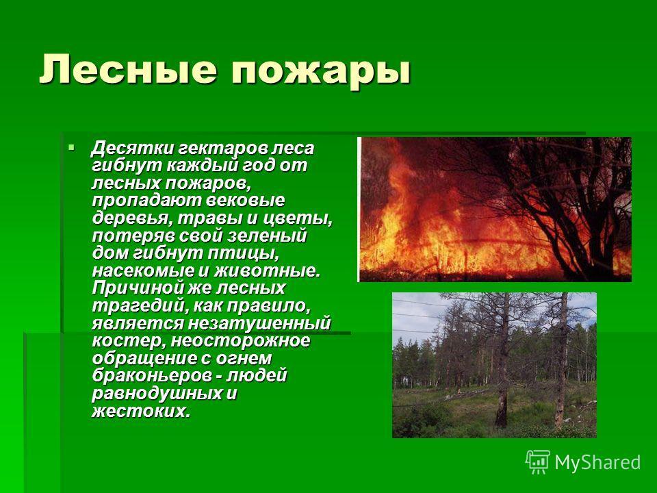 Лесные пожары Десятки гектаров леса гибнут каждый год от лесных пожаров, пропадают вековые деревья, травы и цветы, потеряв свой зеленый дом гибнут птицы, насекомые и животные. Причиной же лесных трагедий, как правило, является незатушенный костер, не