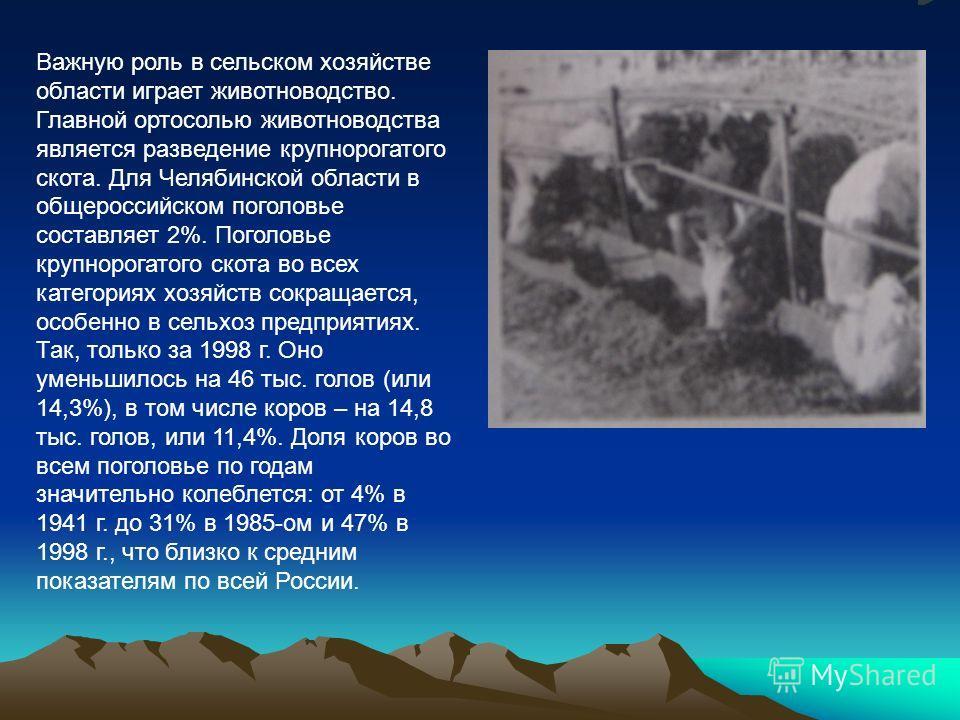 Важную роль в сельском хозяйстве области играет животноводство. Главной ортосолью животноводства является разведение крупнорогатого скота. Для Челябинской области в общероссийском поголовье составляет 2%. Поголовье крупнорогатого скота во всех катего