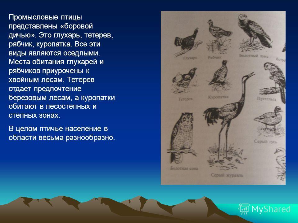 Промысловые птицы представлены «боровой дичью». Это глухарь, тетерев, рябчик, куропатка. Все эти виды являются оседлыми. Места обитания глухарей и рябчиков приурочены к хвойным лесам. Тетерев отдает предпочтение березовым лесам, а куропатки обитают в