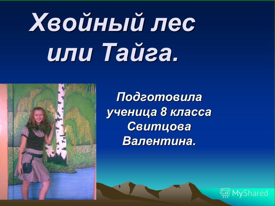 Хвойный лес или Тайга. Подготовила ученица 8 класса Свитцова Валентина.
