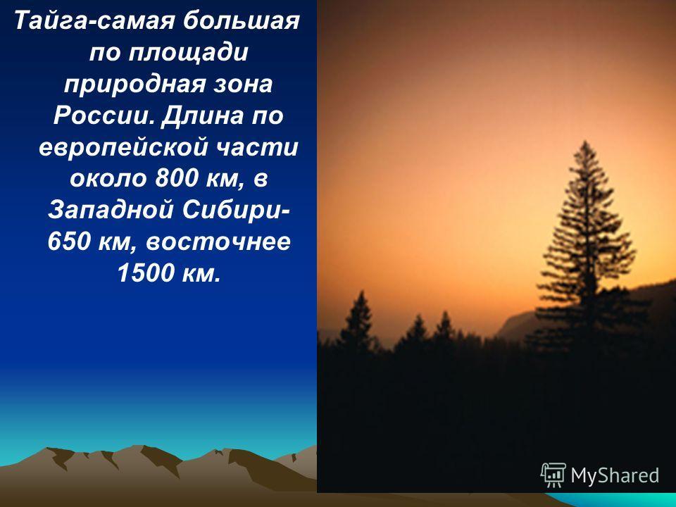 Тайга-самая большая по площади природная зона России. Длина по европейской части около 800 км, в Западной Сибири- 650 км, восточнее 1500 км.