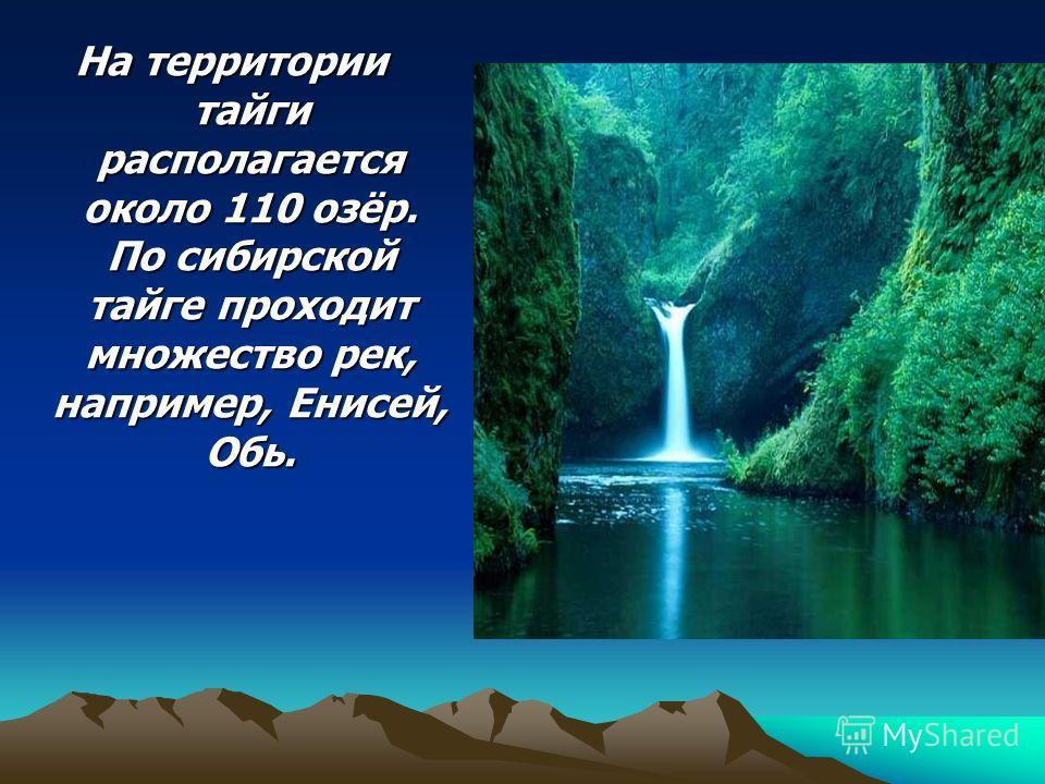 На территории тайги располагается около 110 озёр. По сибирской тайге проходит множество рек, например, Енисей, Обь.