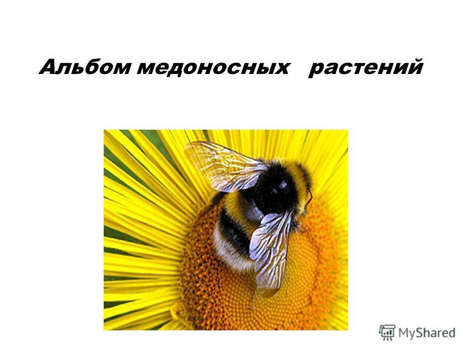 Альбом медоносных растений