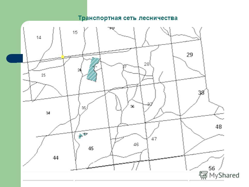 Транспортная сеть лесничества