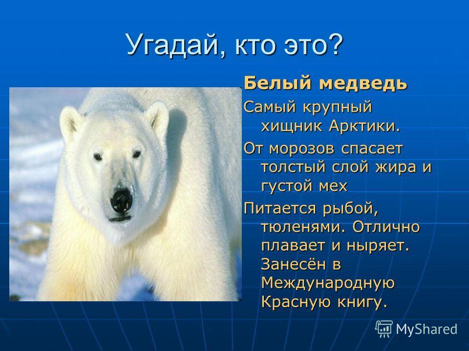 Угадай, кто это? Шубу тёплую он носит, Не страшит его мороз. Одного со снегом цвета, Выдаёт лишь чёрный нос. Белый медведь Самый крупный хищник Арктики. От морозов спасает толстый слой жира и густой мех Питается рыбой, тюленями. Отлично плавает и ныр