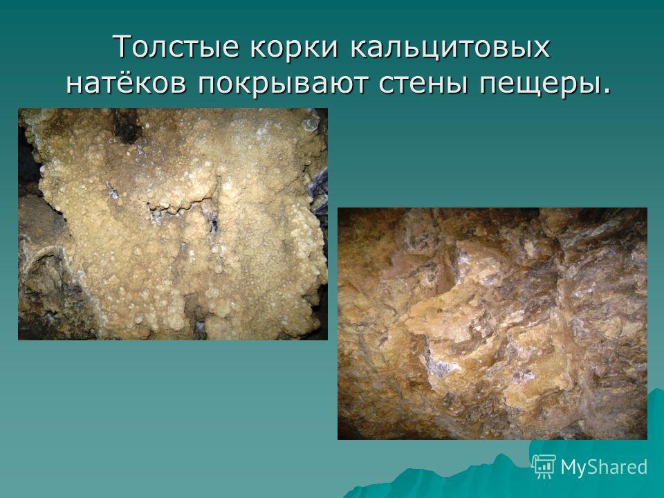 Толстые корки кальцитовых натёков покрывают стены пещеры. Толстые корки кальцитовых натёков покрывают стены пещеры.