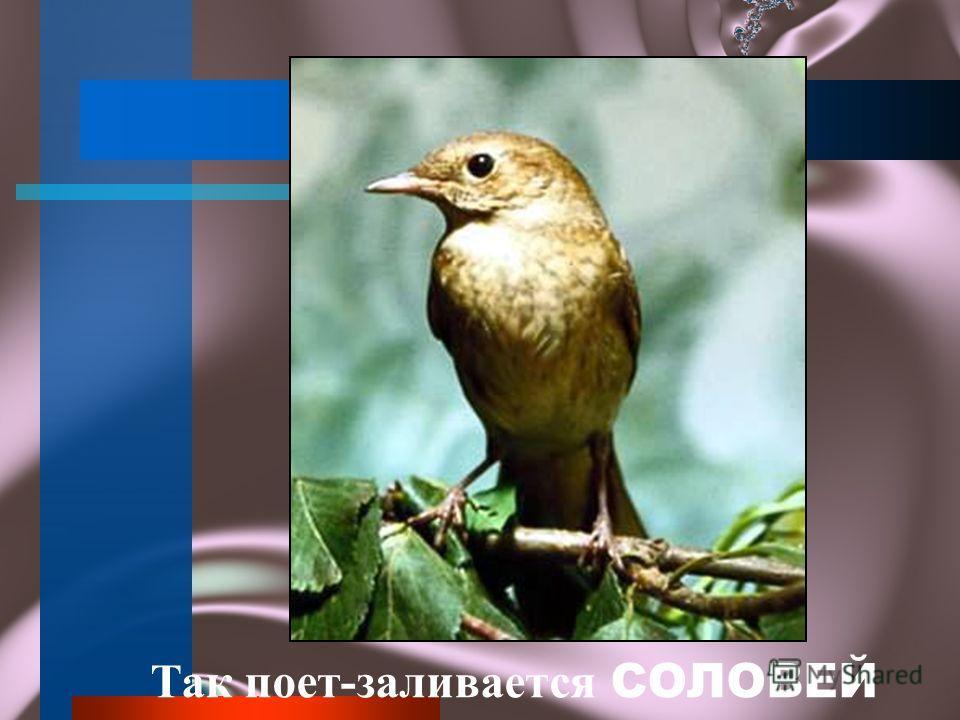 А это звенит птичка СИНИЧКА Природоведение