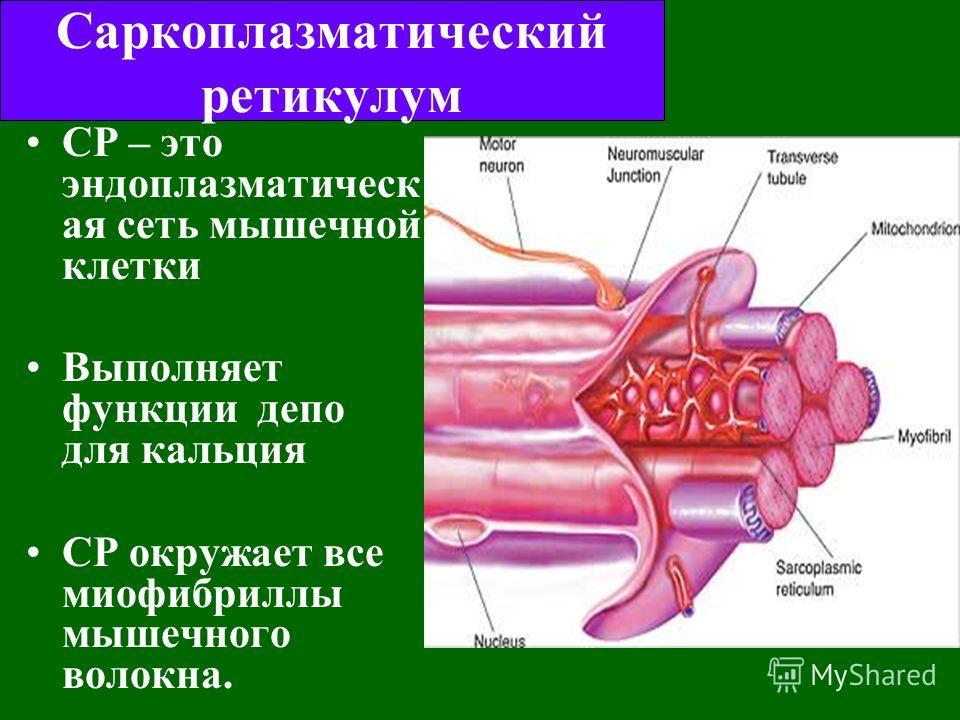 Миоплазма