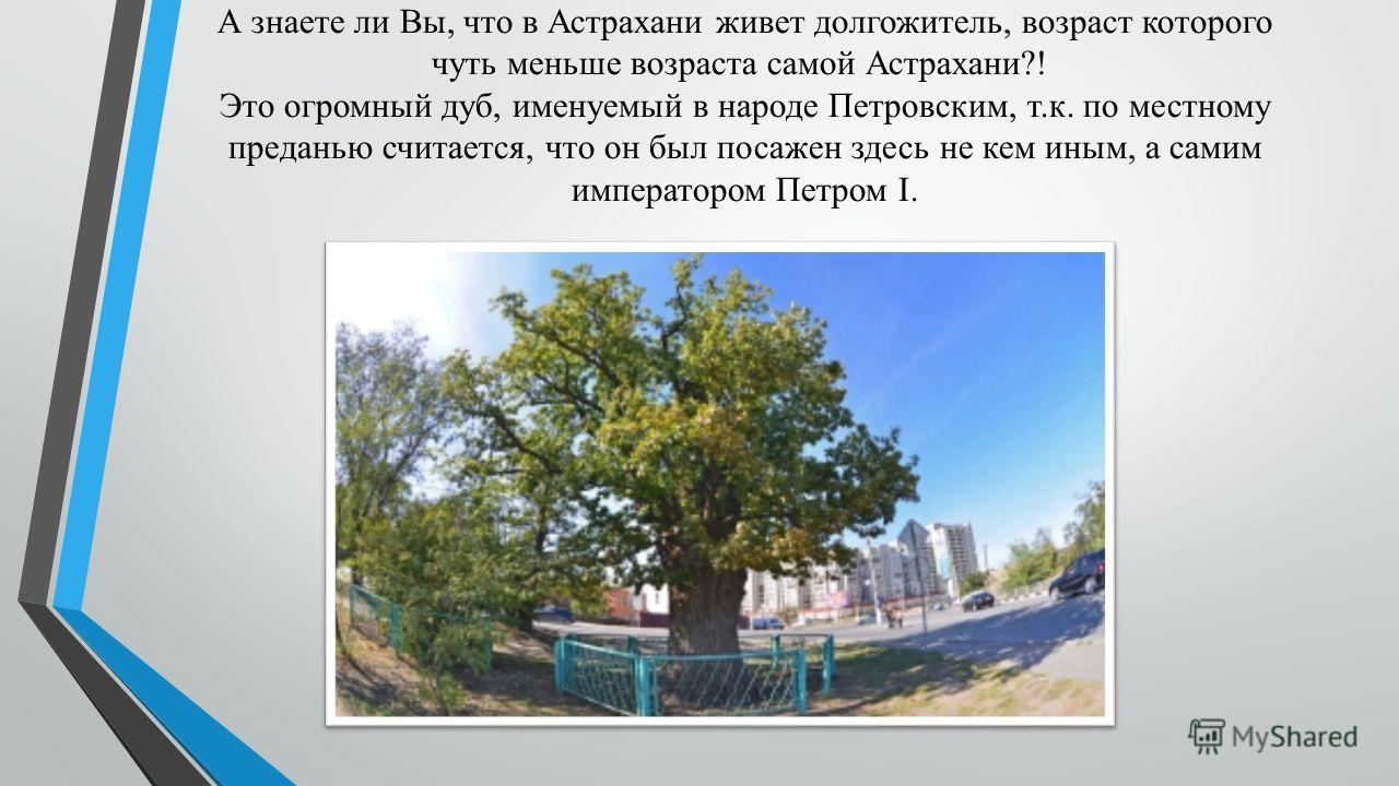 А знаете ли Вы, что в Астрахани живет долгожитель, возраст которого чуть меньше возраста самой Астрахани?! Это огромный дуб, именуемый в народе Петровским, т.к. по местному преданью считается, что он был посажен здесь не кем иным, а самим императором