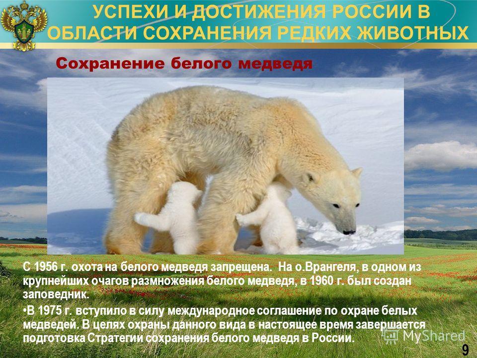 УСПЕХИ И ДОСТИЖЕНИЯ РОССИИ В ОБЛАСТИ СОХРАНЕНИЯ РЕДКИХ ЖИВОТНЫХ 9 Сохранение белого медведя С 1956 г. охота на белого медведя запрещена. На о.Врангеля, в одном из крупнейших очагов размножения белого медведя, в 1960 г. был создан заповедник. В 1975 г