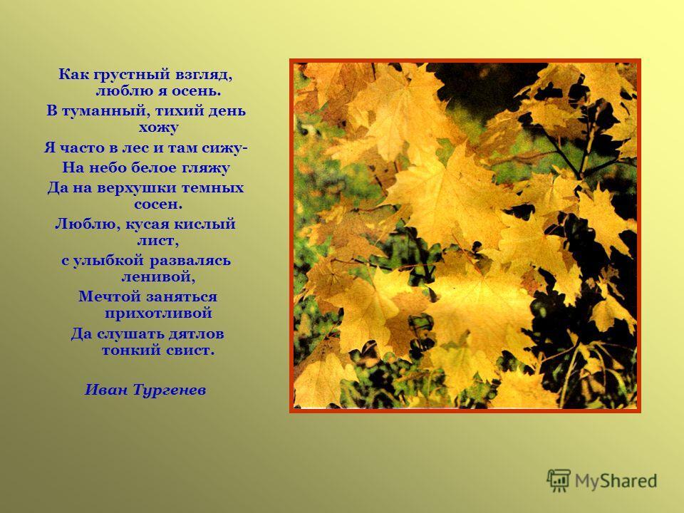 Как грустный взгляд, люблю я осень. В туманный, тихий день хожу Я часто в лес и там сижу- На небо белое гляжу Да на верхушки темных сосен. Люблю, кусая кислый лист, с улыбкой развалясь ленивой, Мечтой заняться прихотливой Да слушать дятлов тонкий сви