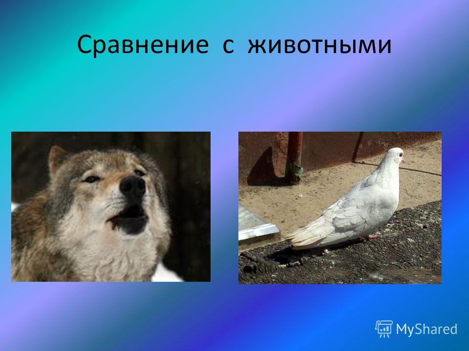 Сравнение с животными