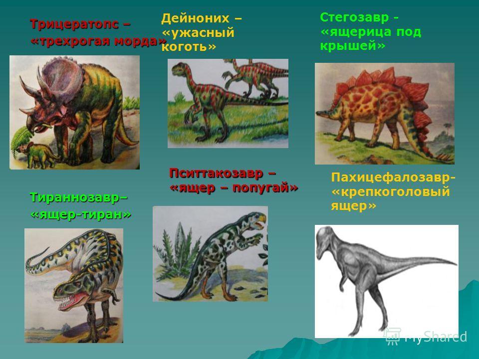 Трицератопс – «трехрогая морда» Тираннозавр–«ящер-тиран» Дейноних – «ужасный коготь» Пситтакозавр – «ящер – попугай» Стегозавр - «ящерица под крышей» Пахицефалозавр- «крепкоголовый ящер»