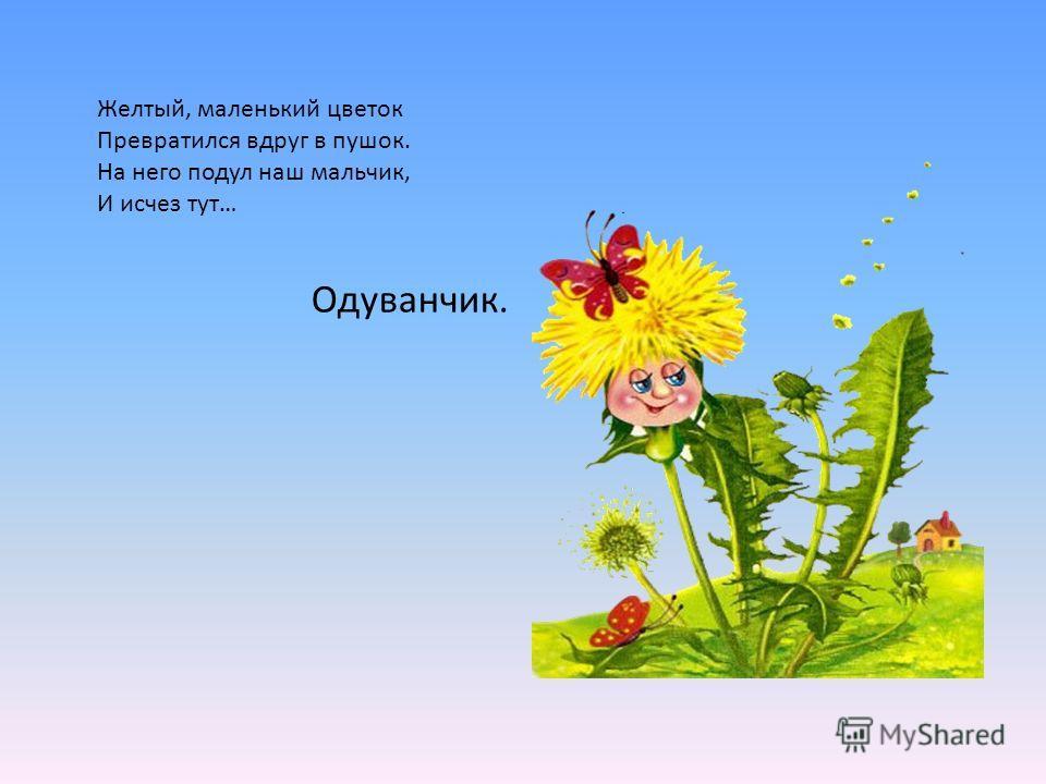 Желтый, маленький цветок Превратился вдруг в пушок. На него подул наш мальчик, И исчез тут… Одуванчик.