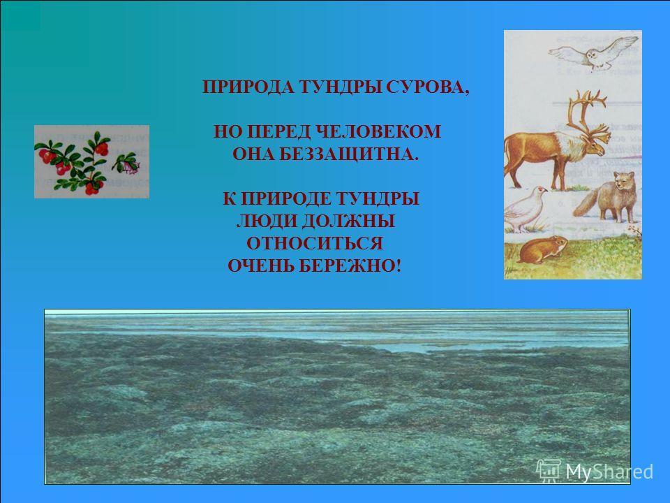 ПРИРОДА ТУНДРЫ СУРОВА, НО ПЕРЕД ЧЕЛОВЕКОМ ОНА БЕЗЗАЩИТНА. К ПРИРОДЕ ТУНДРЫ ЛЮДИ ДОЛЖНЫ ОТНОСИТЬСЯ ОЧЕНЬ БЕРЕЖНО!