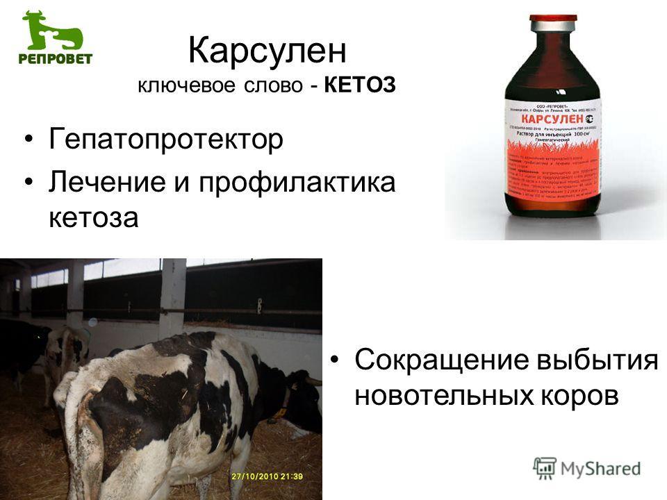 Карсулен ключевое слово - КЕТОЗ Гепатопротектор Лечение и профилактика кетоза Сокращение выбытия новотельных коров