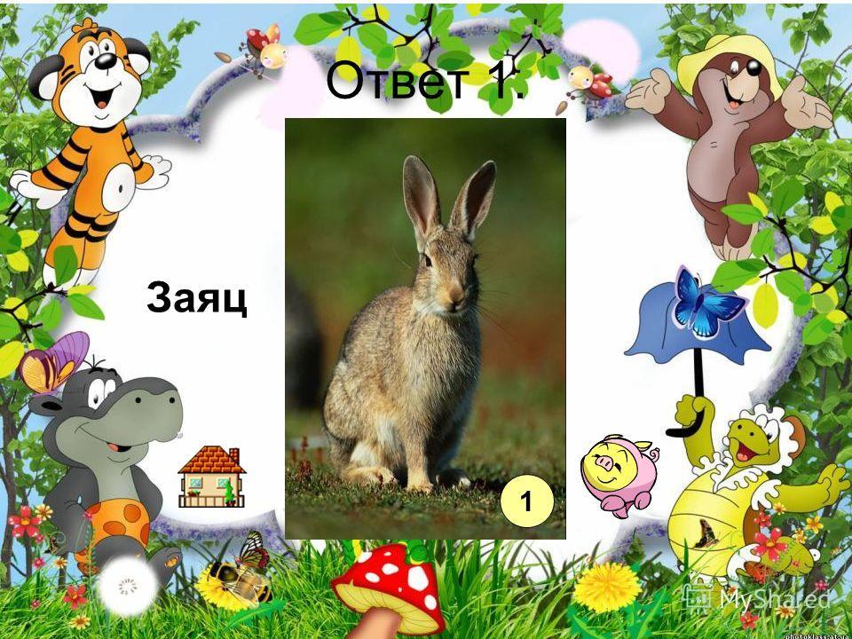Ответ 1. Заяц 1