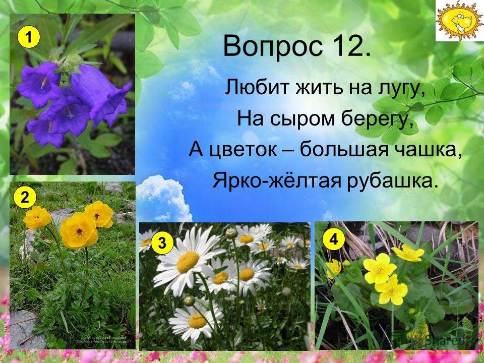 Вопрос 12. Любит жить на лугу, На сыром берегу, А цветок – большая чашка, Ярко-жёлтая рубашка. 1 2 3 4