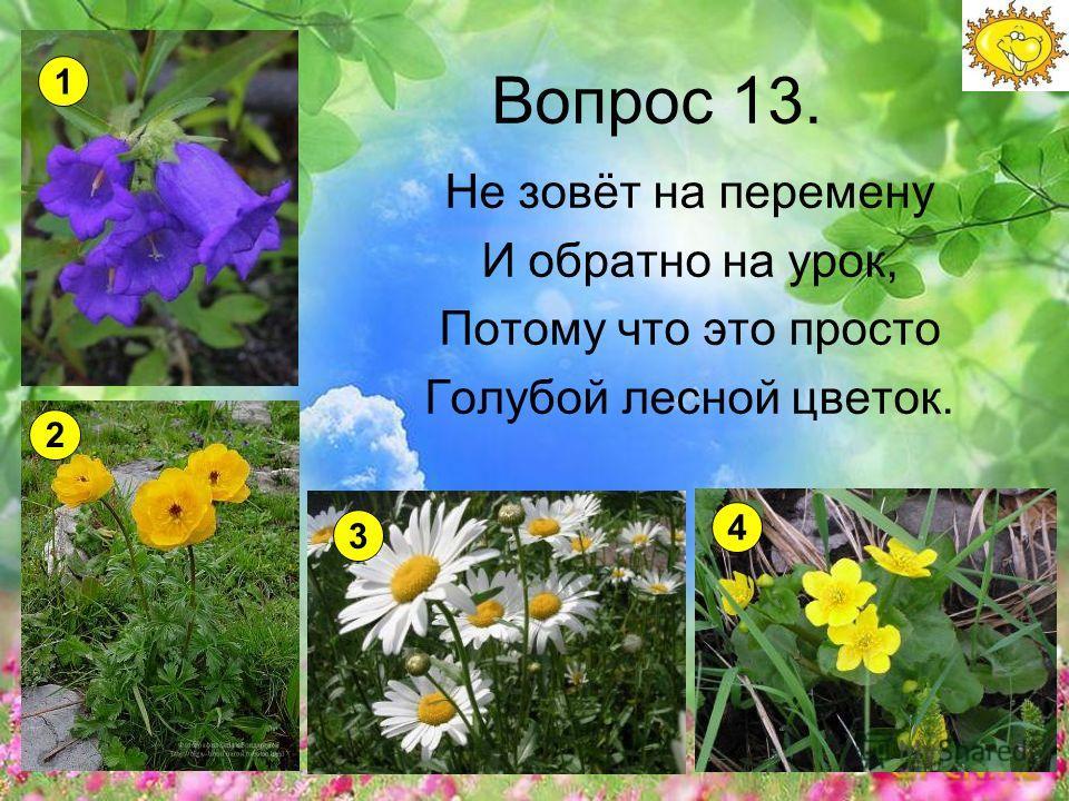 Вопрос 13. Не зовёт на перемену И обратно на урок, Потому что это просто Голубой лесной цветок. 1 2 3 4