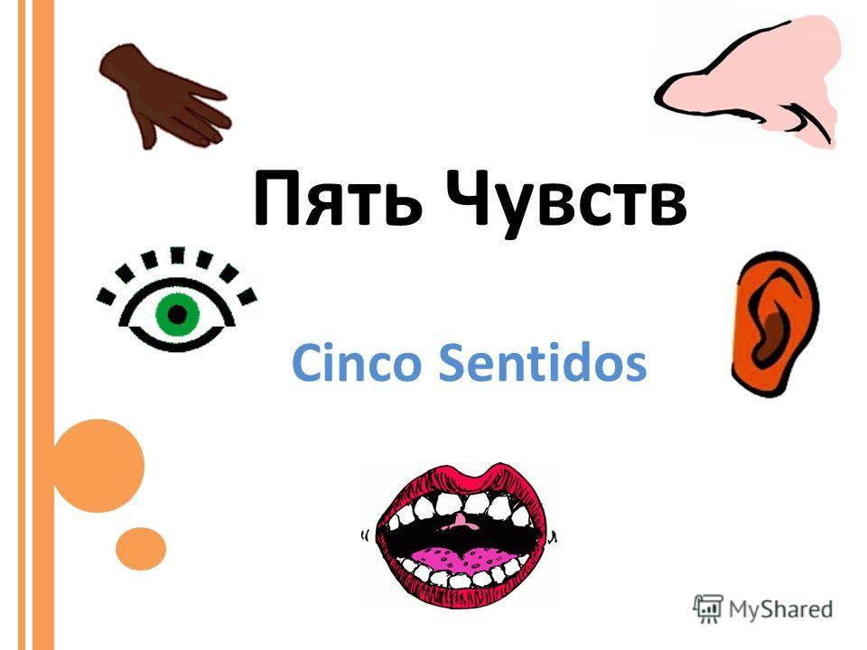 Пять Чувств Cinco Sentidos