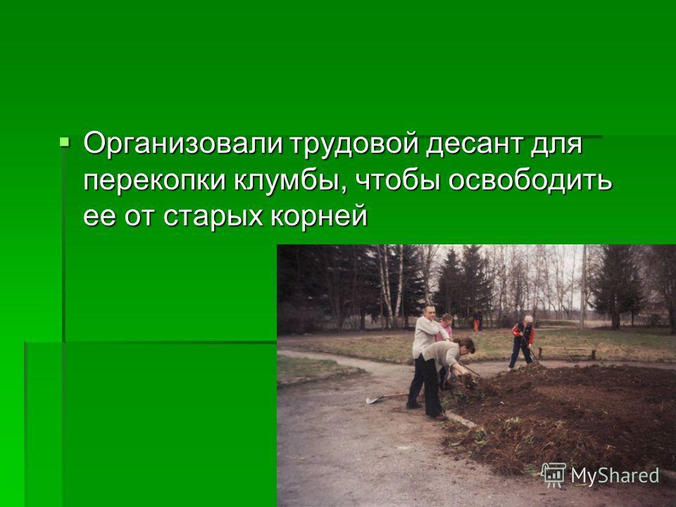 Организовали трудовой десант для перекопки клумбы, чтобы освободить ее от старых корней Организовали трудовой десант для перекопки клумбы, чтобы освободить ее от старых корней