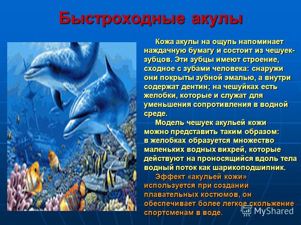 Быстроходные акулы Кожа акулы на ощупь напоминает наждачную бумагу и состоит из чешуек- зубцов. Эти зубцы имеют строение, сходное с зубами человека: снаружи они покрыты зубной эмалью, а внутри содержат дентин; на чешуйках есть желобки, которые и служ