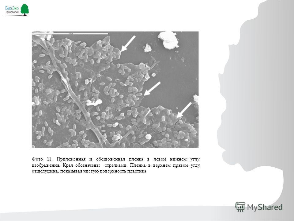 Фото 11. Приложенная и обезвоженная пленка в левом нижнем углу изображения. Края обозначены стрелками. Пленка в верхнем правом углу отшелушена, показывая чистую поверхность пластика