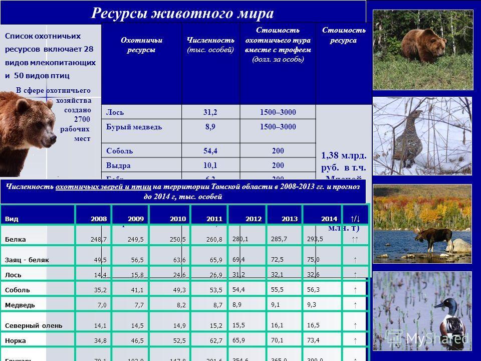 Ресурсы животного мира Охотничьи ресурсы Численность (тыс. особей) Стоимость охотничьего тура вместе с трофеем (долл. за особь) Стоимость ресурса Лось31,21500–3000 1,38 млрд. руб. в т.ч. Мясной продукци и 495 млн. руб. (2,6 млн. т) Бурый медведь8,915