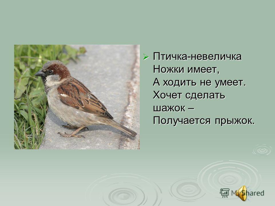 Птичка-невеличка Ножки имеет, А ходить не умеет. Хочет сделать шажок – Получается прыжок. Птичка-невеличка Ножки имеет, А ходить не умеет. Хочет сделать шажок – Получается прыжок.