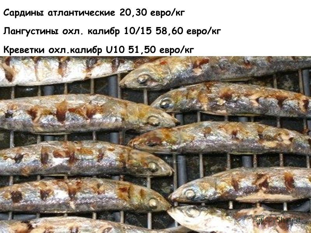 Сардины атлантические 20,30 евро/кг Лангустины охл. калибр 10/15 58,60 евро/кг Креветки охл.калибр U10 51,50 евро/кг