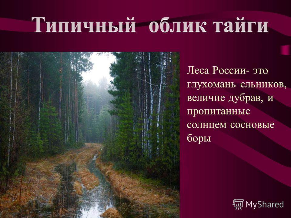 Зона тайги занимает самую большую площадь по сравнению с другими зонами России. Тайга протянулась с запада на восток более чем на 7000км.