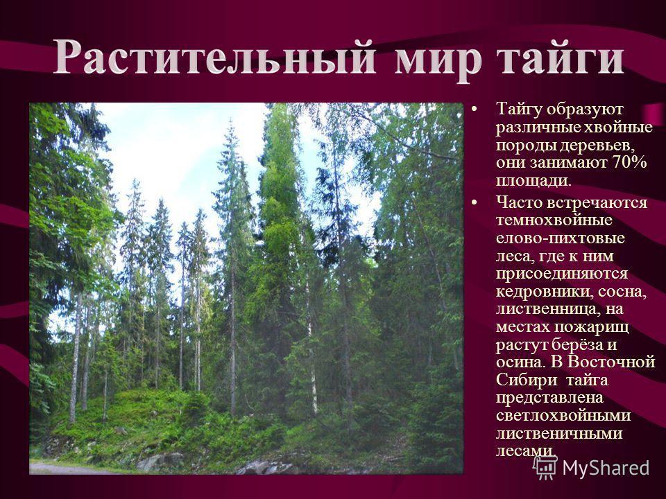 Почвы под таёжными лесами разные, но в основном это подзолистые и дерново- подзолистые. Характерная черта этих почв - их бедность питательными веществами.