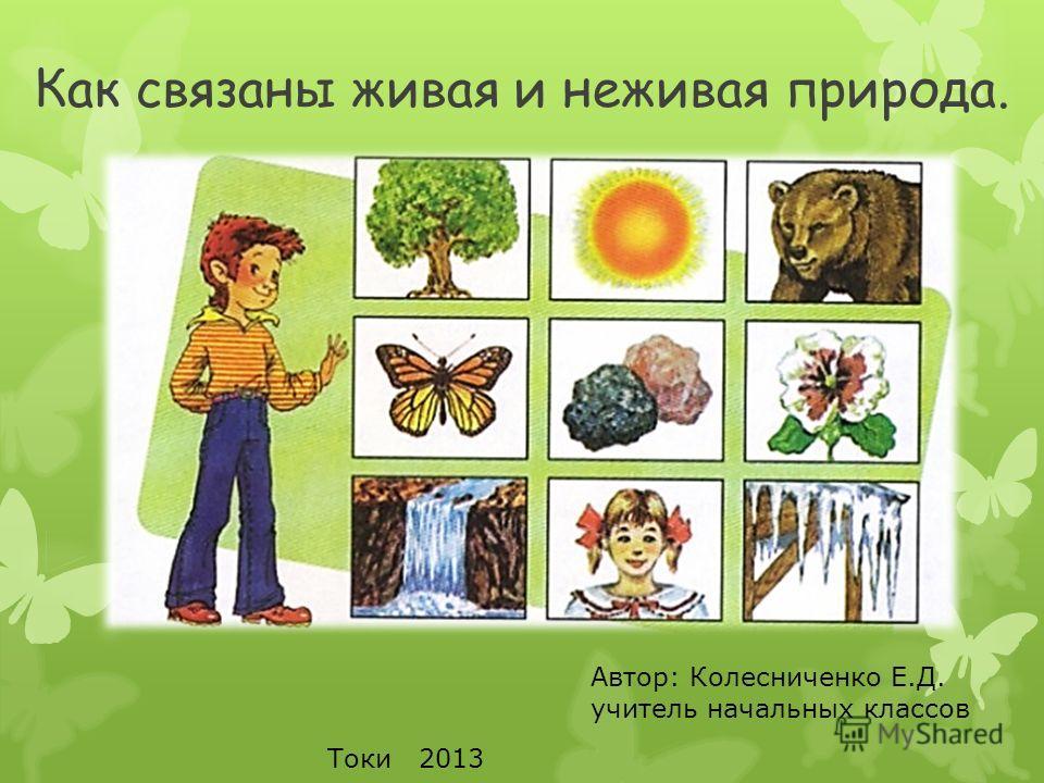 Как связаны живая и неживая природа. Автор: Колесниченко Е.Д. учитель начальных классов Токи 2013