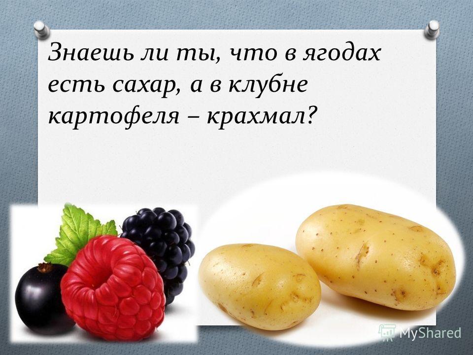 Знаешь ли ты, что в ягодах есть сахар, а в клубне картофеля – крахмал?