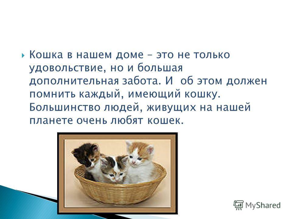 Кошка в нашем доме – это не только удовольствие, но и большая дополнительная забота. И об этом должен помнить каждый, имеющий кошку. Большинство людей, живущих на нашей планете очень любят кошек.