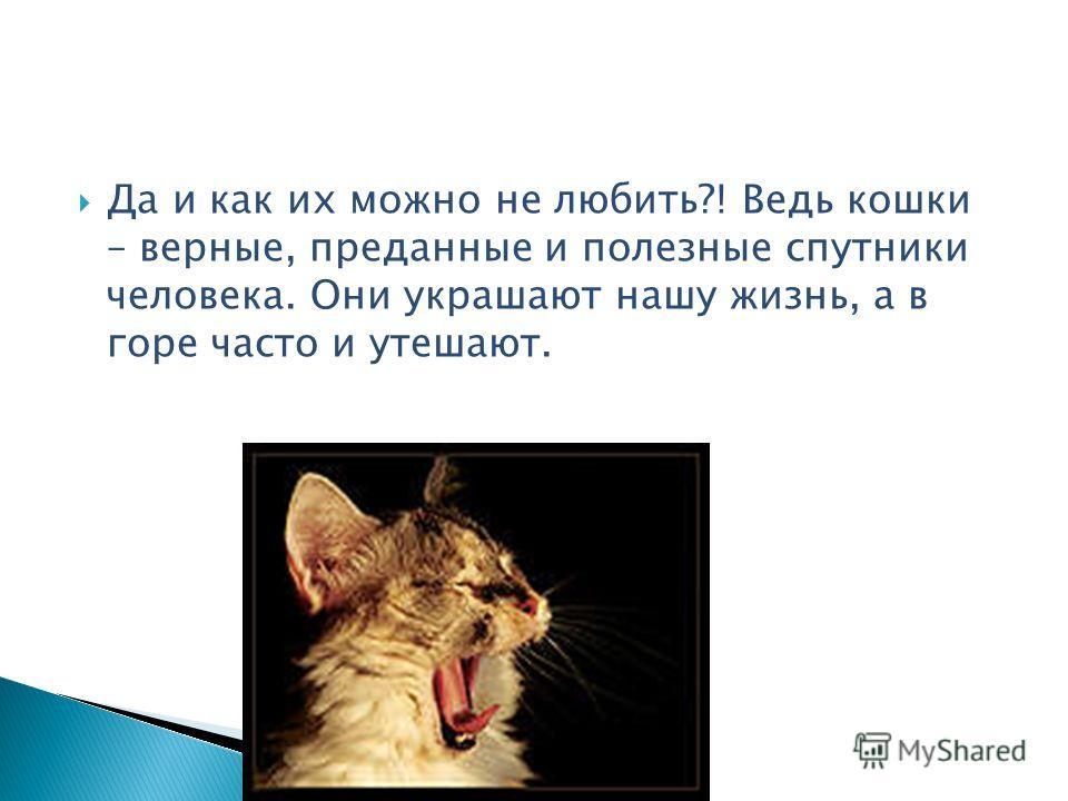 Да и как их можно не любить?! Ведь кошки – верные, преданные и полезные спутники человека. Они украшают нашу жизнь, а в горе часто и утешают.