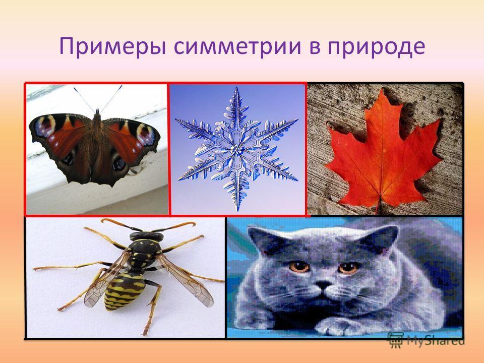 Примеры симметрии в природе