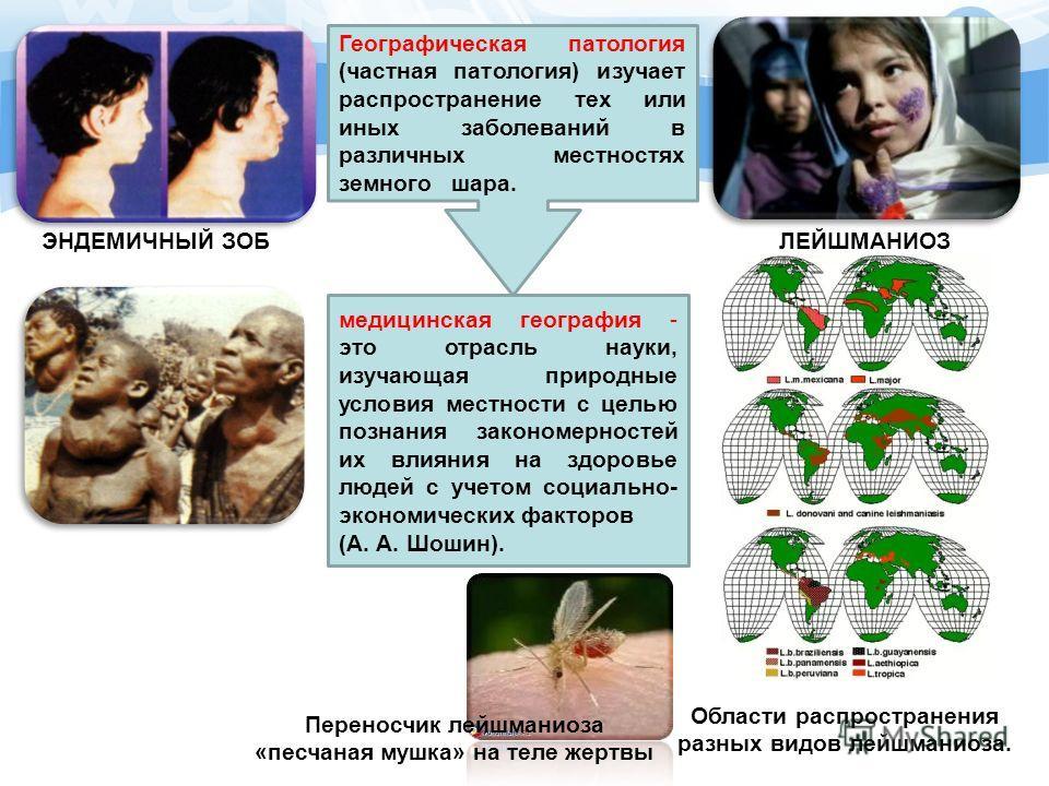 Географическая патология (частная патология) изучает распространение тех или иных заболеваний в различных местностях земного шара. медицинская география - это отрасль науки, изучающая природные условия местности с целью познания закономерностей их вл