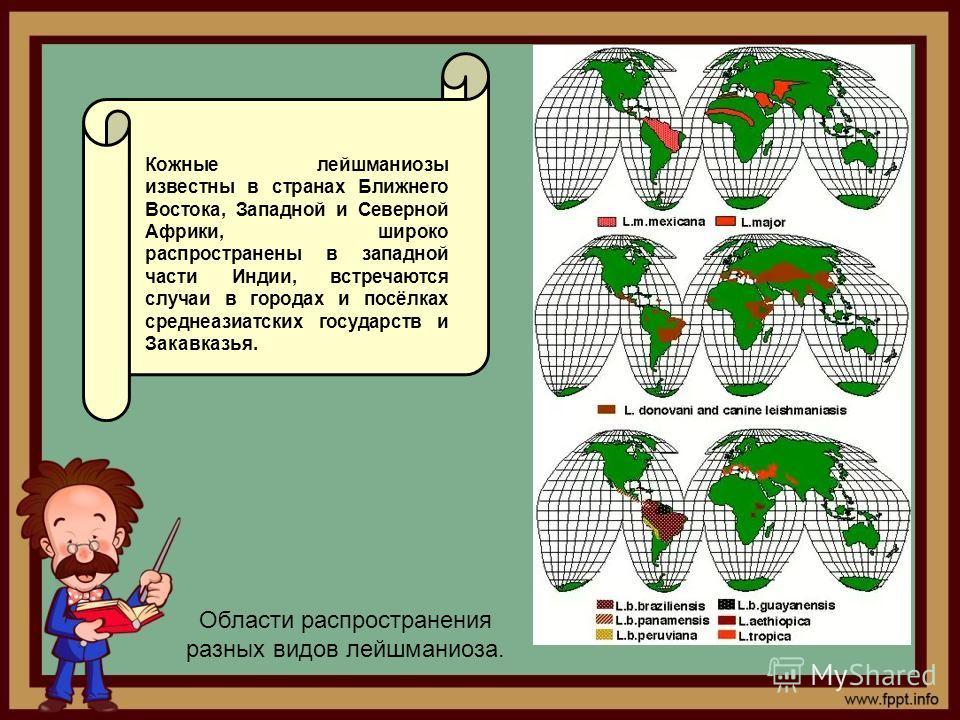 Области распространения разных видов лейшманиоза.. Кожные лейшманиозы известны в странах Ближнего Востока, Западной и Северной Африки, широко распространены в западной части Индии, встречаются случаи в городах и посёлках среднеазиатских государств и