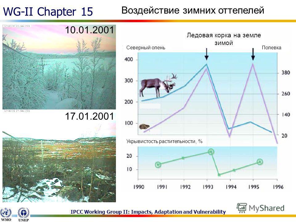 IPCC Working Group II: Impacts, Adaptation and Vulnerability WG-II Chapter 15 Воздействие зимних оттепелей Ледовая корка на земле зимой ПолевкаСеверный олень Укрывистость растительности, % 10.01.2001 17.01.2001