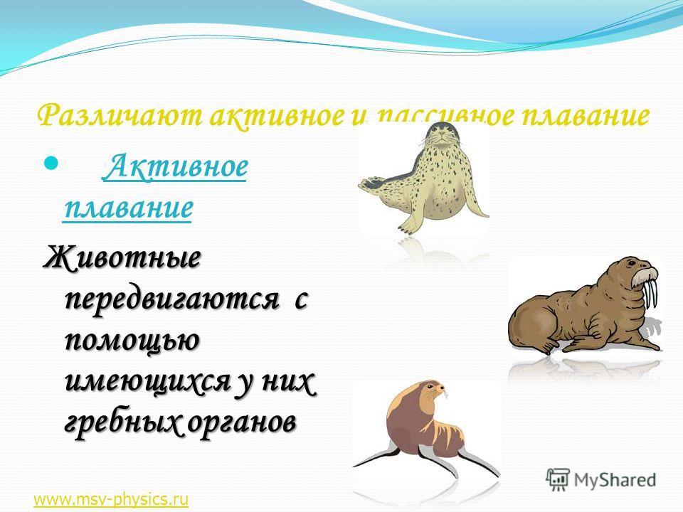 Различают активное и пассивное плавание Активное плавание Животные передвигаются с помощью имеющихся у них гребных органов www.msv-physics.ru