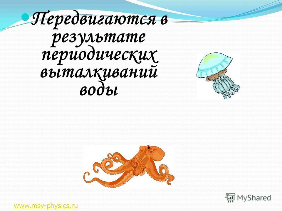 Передвигаются в результате периодических выталкиваний воды Передвигаются в результате периодических выталкиваний воды www.msv-physics.ru