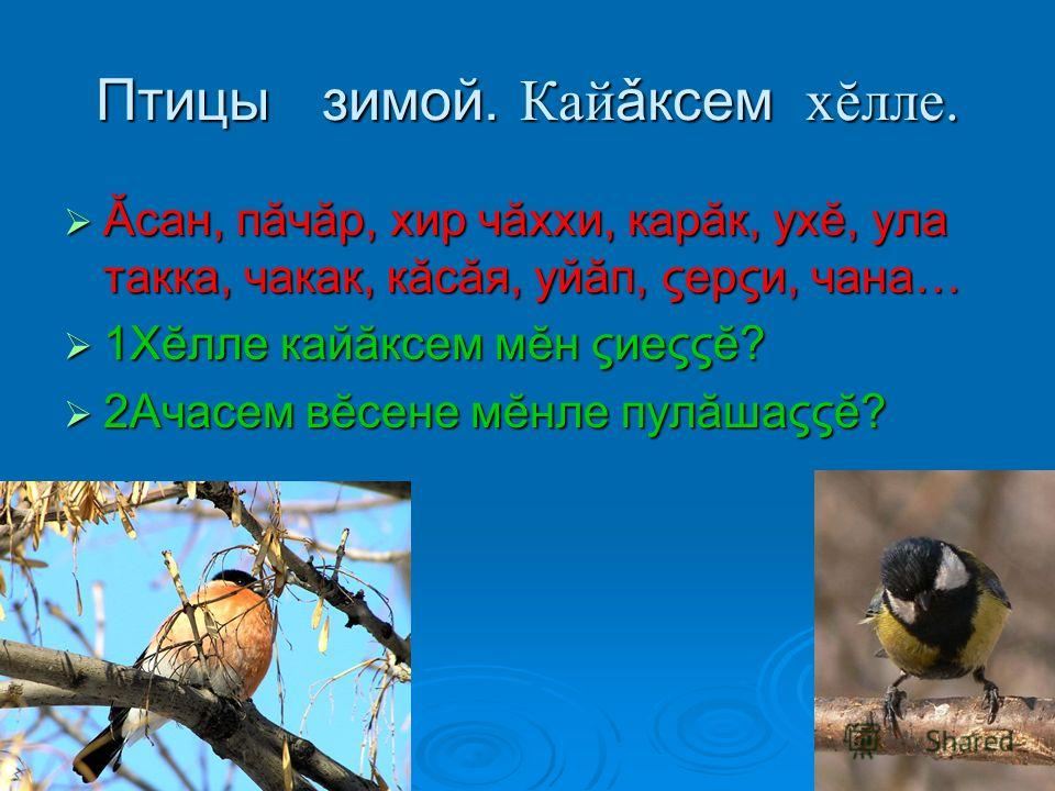Птицы зимой. Кай ǎксем хĕлле. Ăсан, пăчăр, хир чăххи, карăк, ухĕ, ула такка, чакак, кăсăя, уйăп, ςерςи, чана… Ăсан, пăчăр, хир чăххи, карăк, ухĕ, ула такка, чакак, кăсăя, уйăп, ςерςи, чана… 1Хĕлле кайăксем мĕн ςиеςςĕ? 1Хĕлле кайăксем мĕн ςиеςςĕ? 2Ача