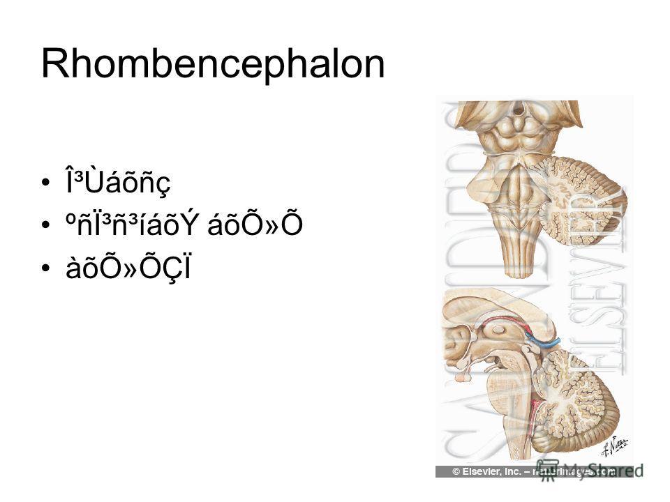 Rhombencephalon γÙáõñç ºñϳñ³íáõÝ áõÕ»Õ àõÕ»ÕÇÏ